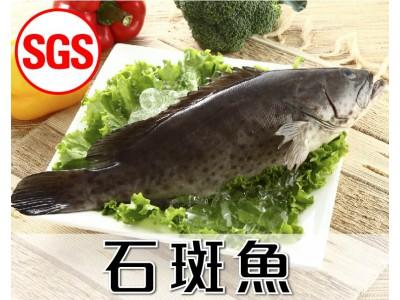 SGS檢驗 石斑魚1尾