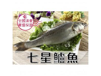 七星鱸魚1尾